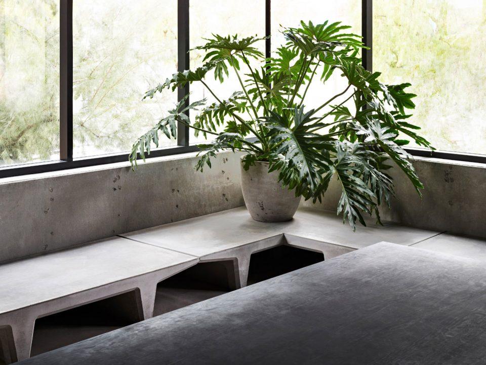 A plant on a concrete bench